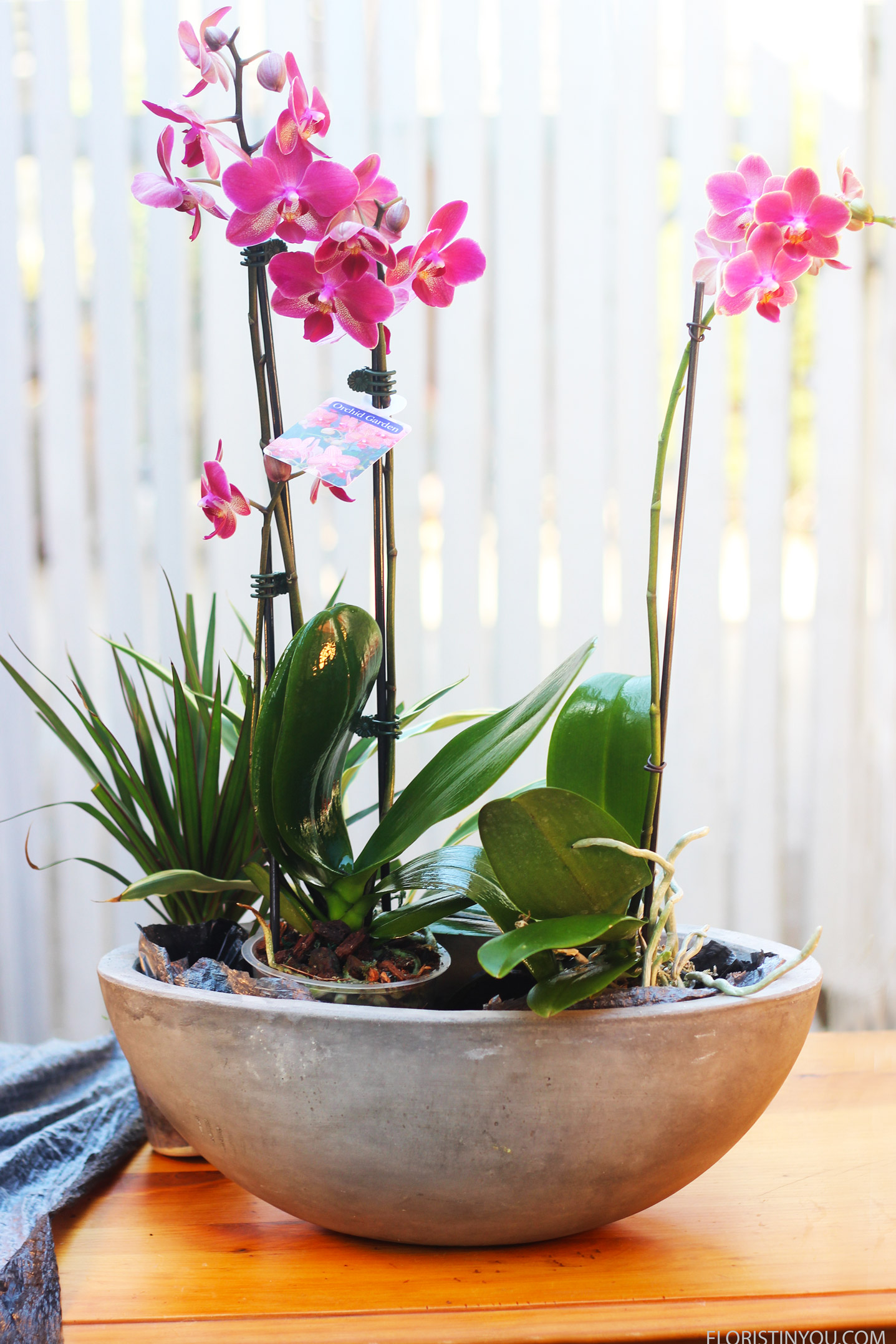 Place orchids first, then the plants around them.