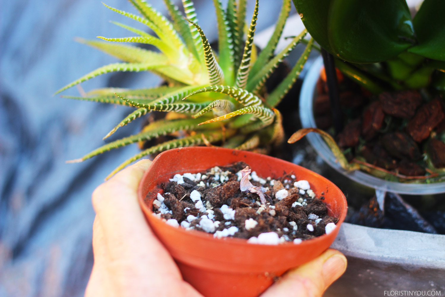 Fill around all plant cups up to their rim.