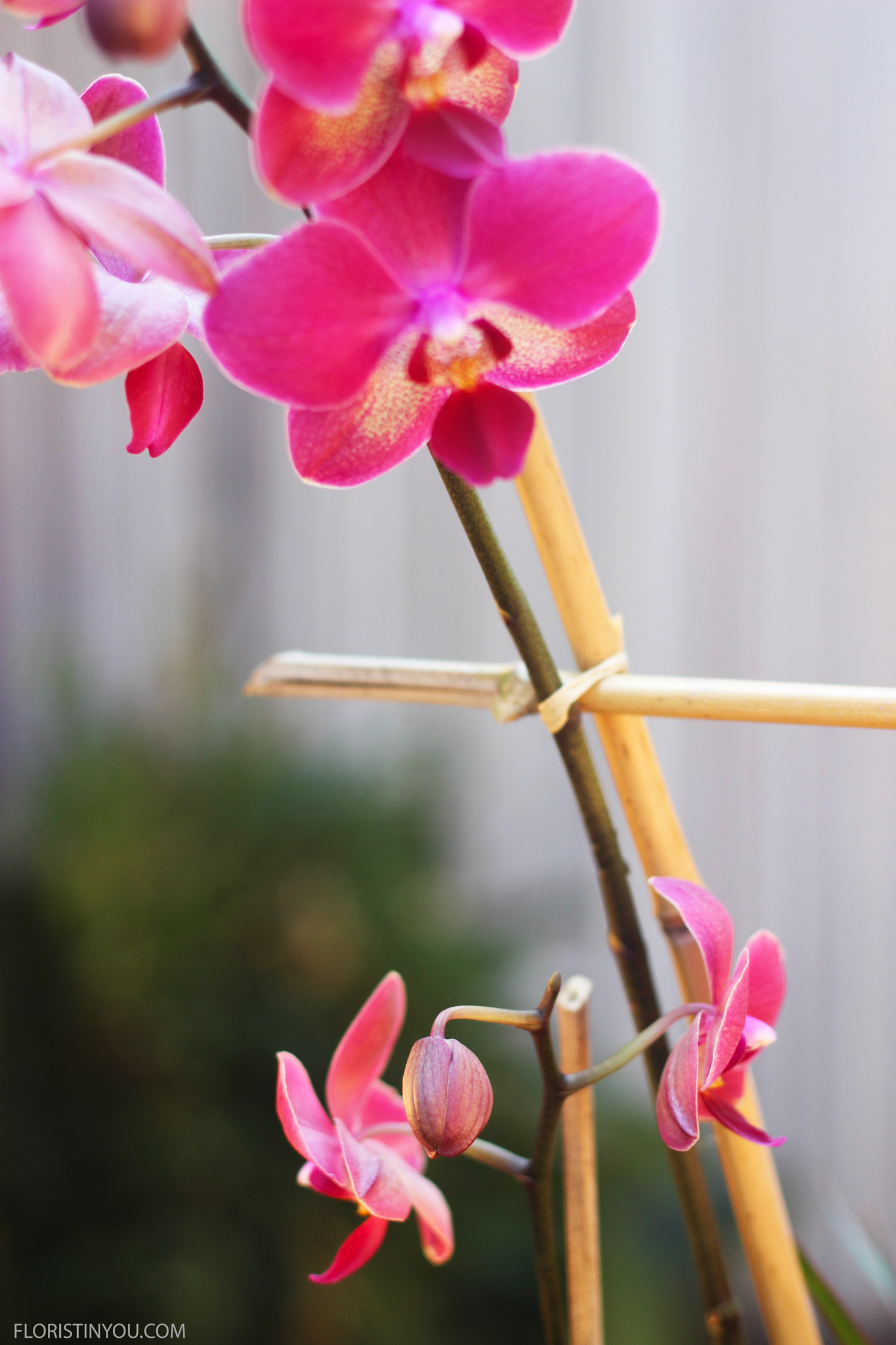 On left and middle tie other end of horizontal Bamboo to verticle Bamboo and Orchid.