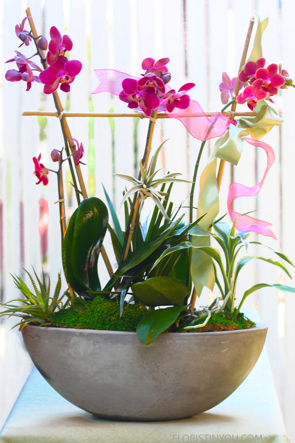 Orchids in a cement Vase
