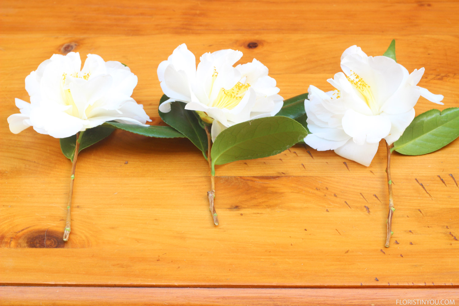 Cut 3 blooms or 6 for double sided. Cut stems long.