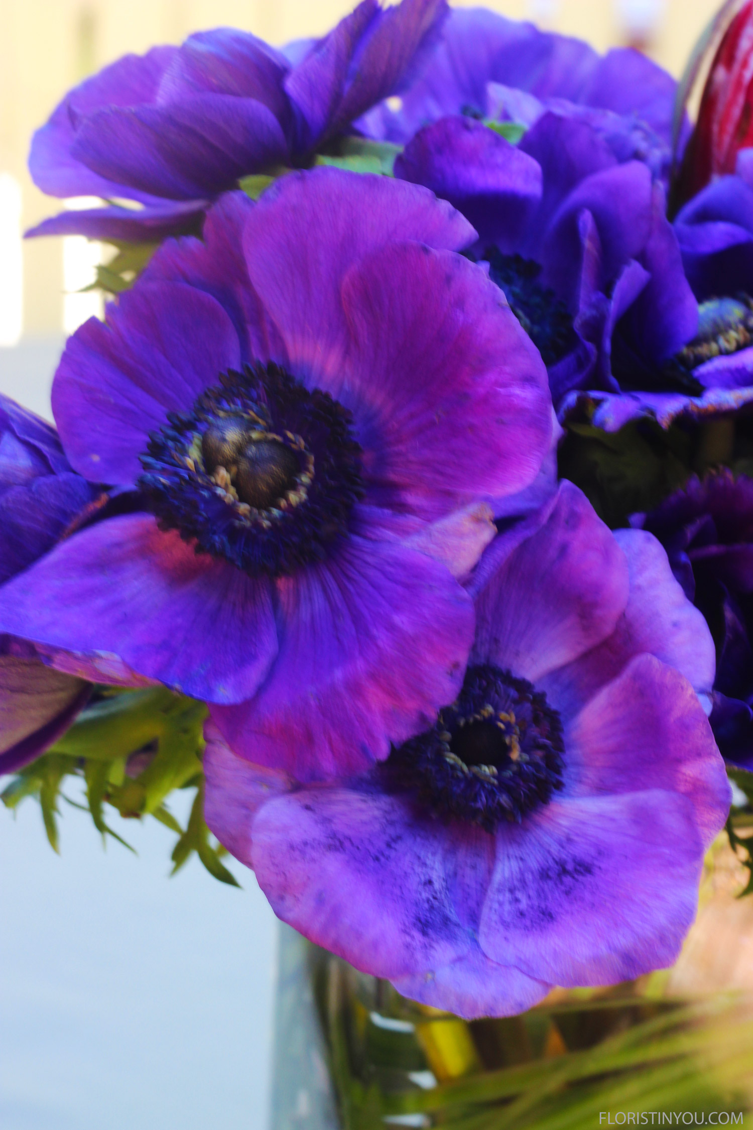 And a close up of the Anemones.