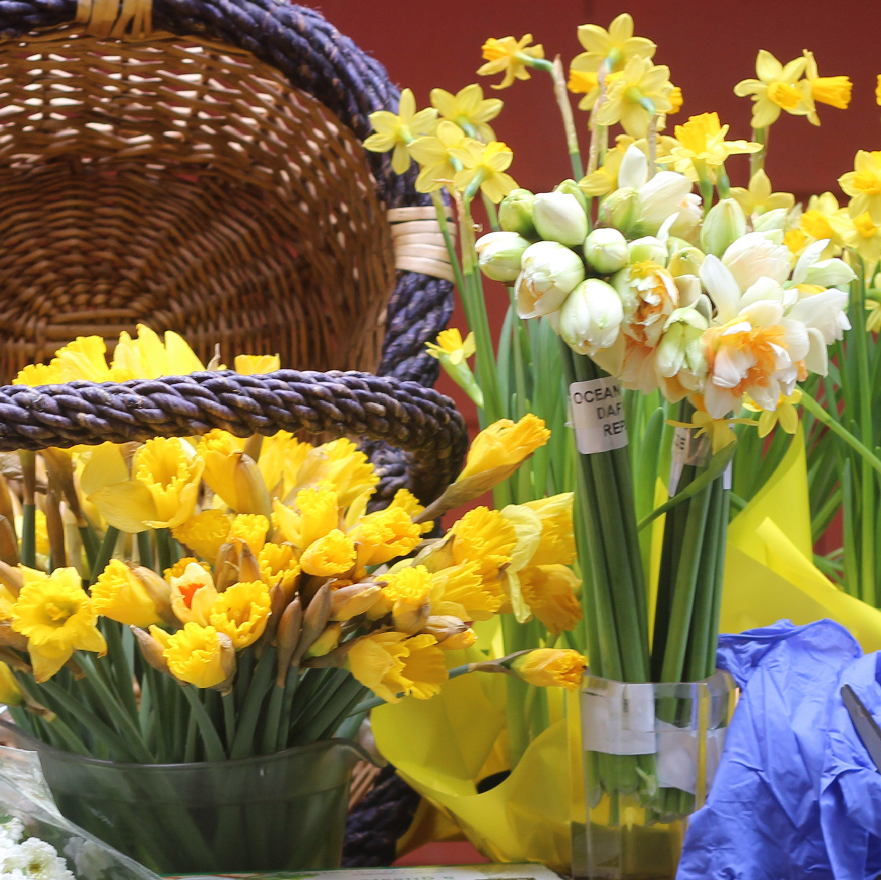 You will use a couple Yellow Daffodils and White Double Daffodils.