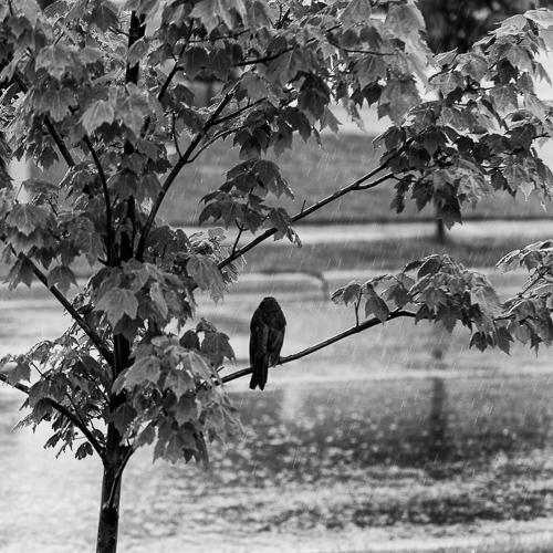 rain bird.jpg