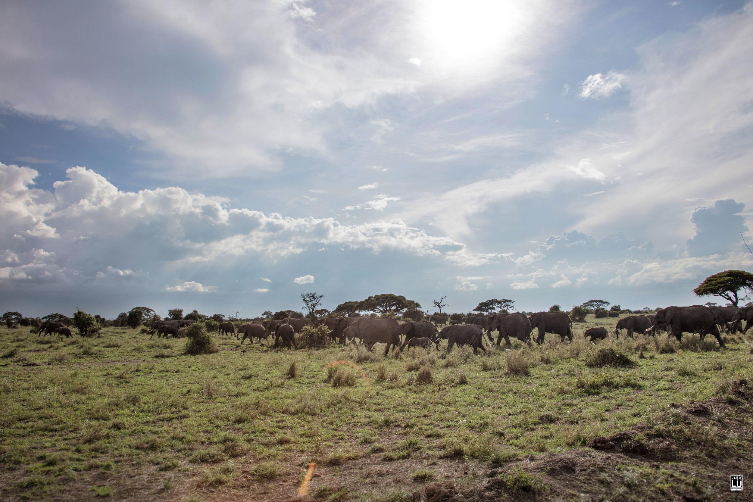 This herd was huge!