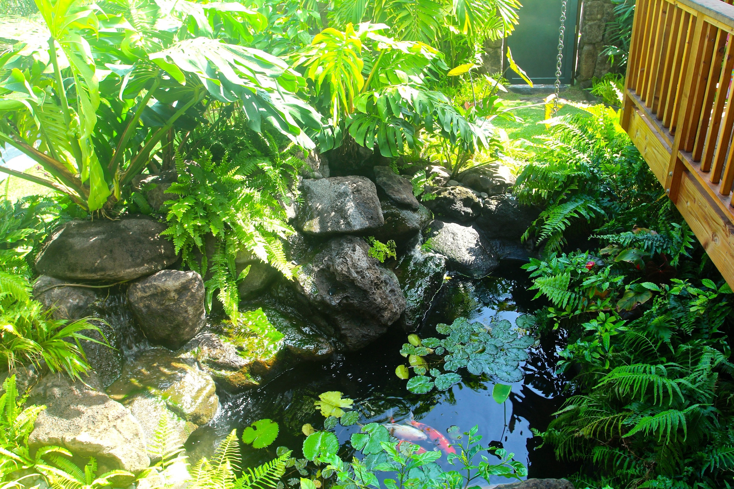 Natural Waterfall with Fish Pond