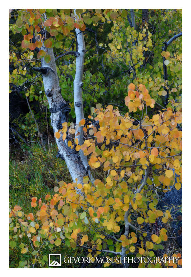 gevork_mosesi_photography_autumn_fall_aspen_trees_eastern_sierras_lake_sabrina_bishop_california-1.jpg