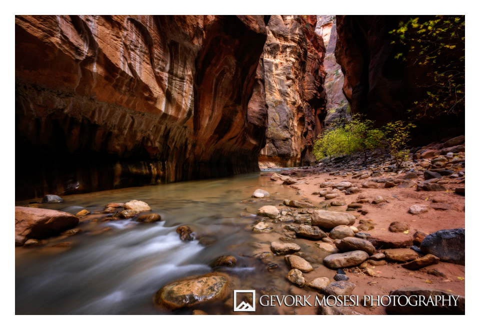 gevork_mosesi_photography_zion_national_park_autumn_fall_foliage_cottonwood_watchman_virgin_river_narrows-4.jpg