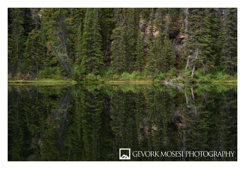 Gevork_mosesi_photography_landscape_banff_alberta_canada_canadian_rockies_trees_pine-1.jpg