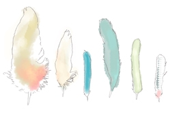feathers-line-drawing.jpg