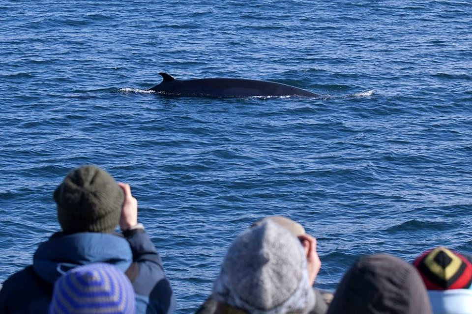 Year round reykjavik classic whale watching - Creative Iceland 11.jpeg