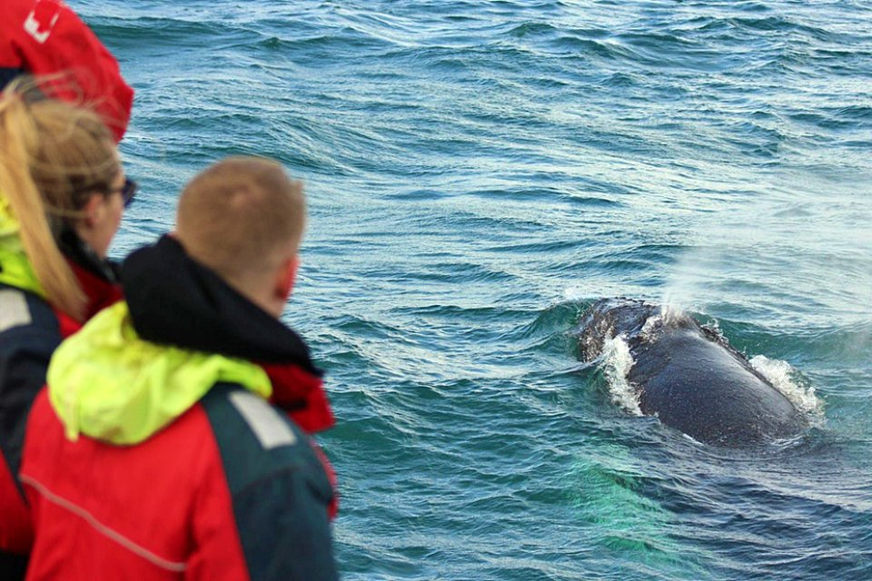 year round reykjavik classic whale watching, whale watching iceland reykjavik, whale watching in iceland reykjavik, iceland whale watching reykjavik, elding whale watching reykjavik iceland, creative iceland