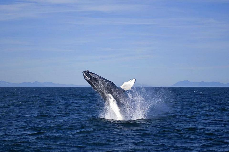 Year round reykjavik classic whale watching - Creative Iceland 05.jpg