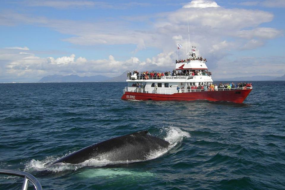 Year round reykjavik classic whale watching - Creative Iceland 08.jpg