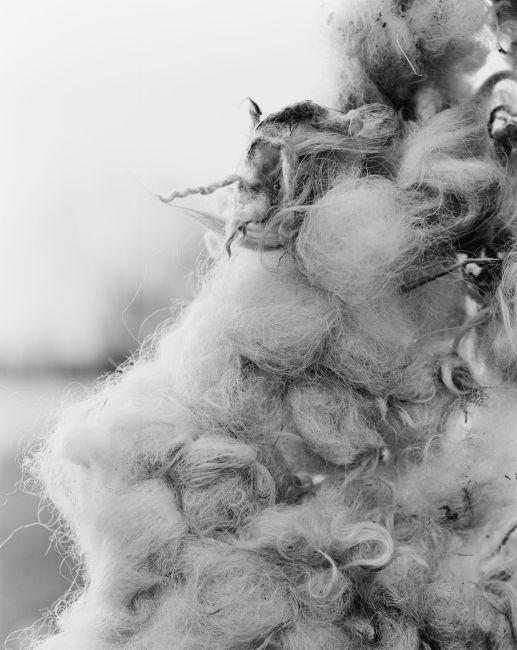 wool macro.jpg
