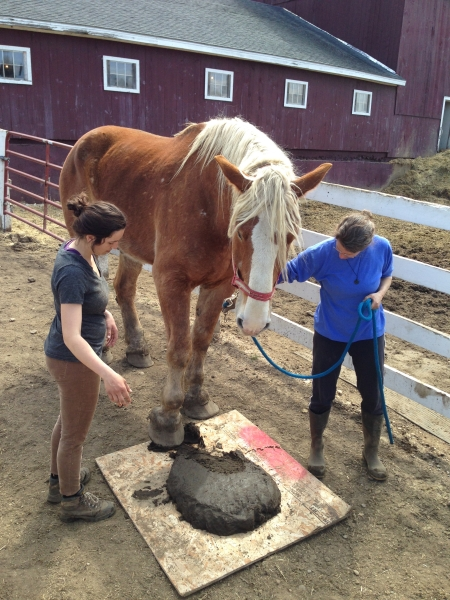 He just wanted to check it out with that gorgeous hoof of his