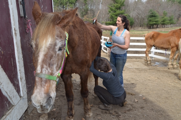 Katie the horse and Barn Manager, Christina Anderson from Blue Star Equiculture. Photo by Jill Greenberg