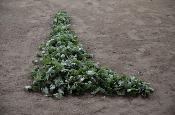 shelburne farms_019nancy winship mi_01.JPG