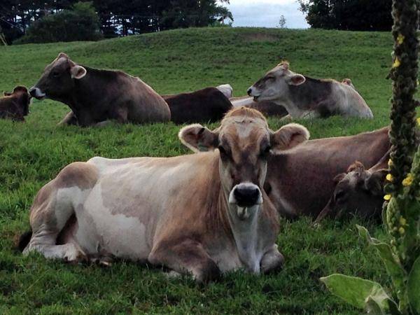 shelburne farms_005nancy winship mi.JPG