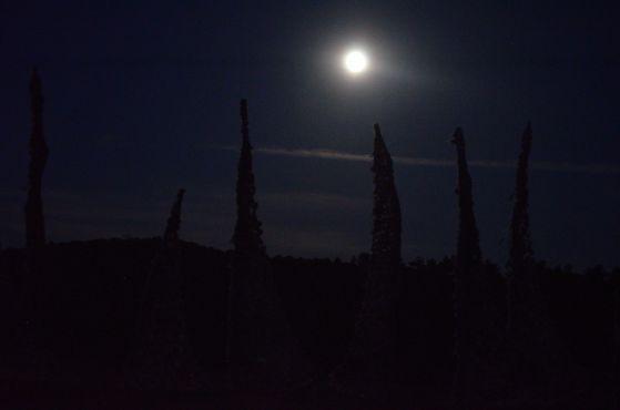 Windscape moon_1nancy winship mi_01.JPG