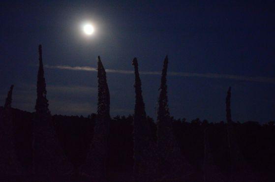 Windscape moon_1nancy winship mi.JPG
