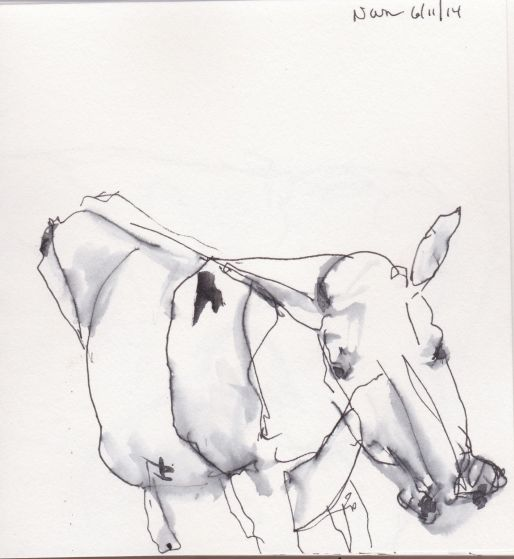 milking 2 1.JPG
