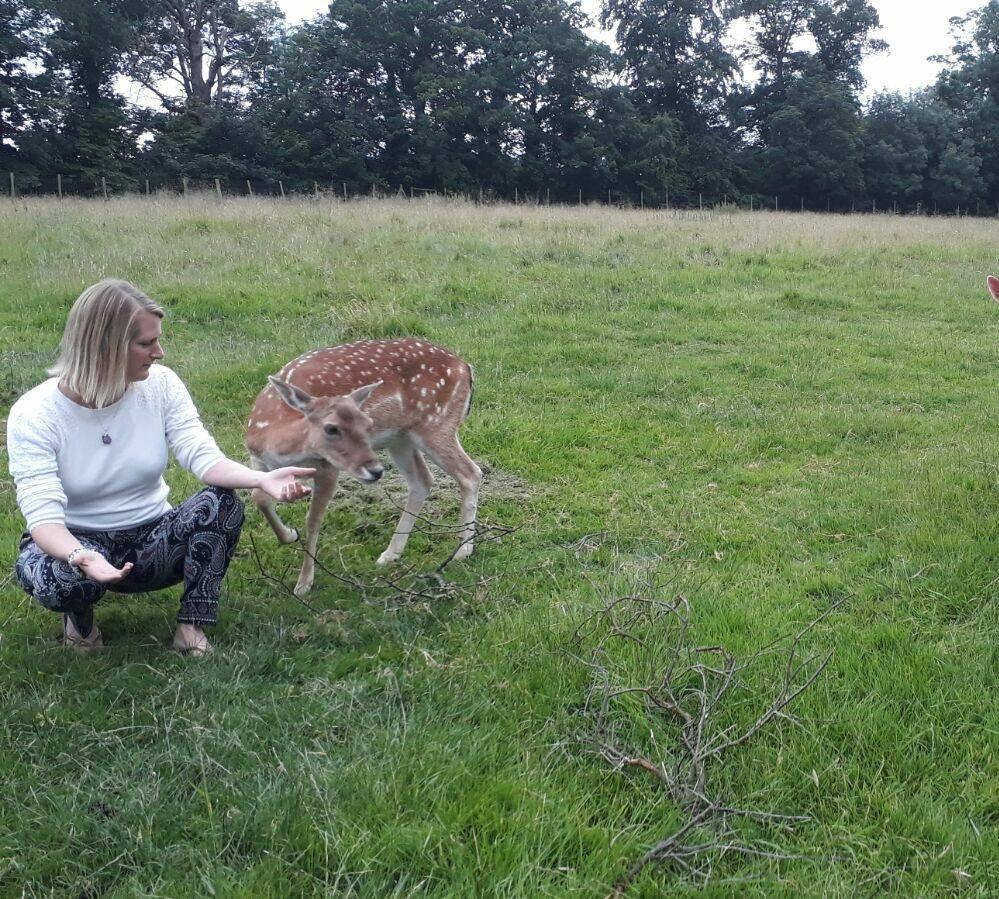 Deer Reiki picture.jpg