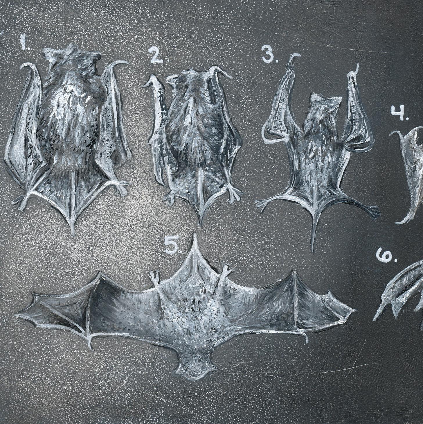Seven Bats and a Funeral