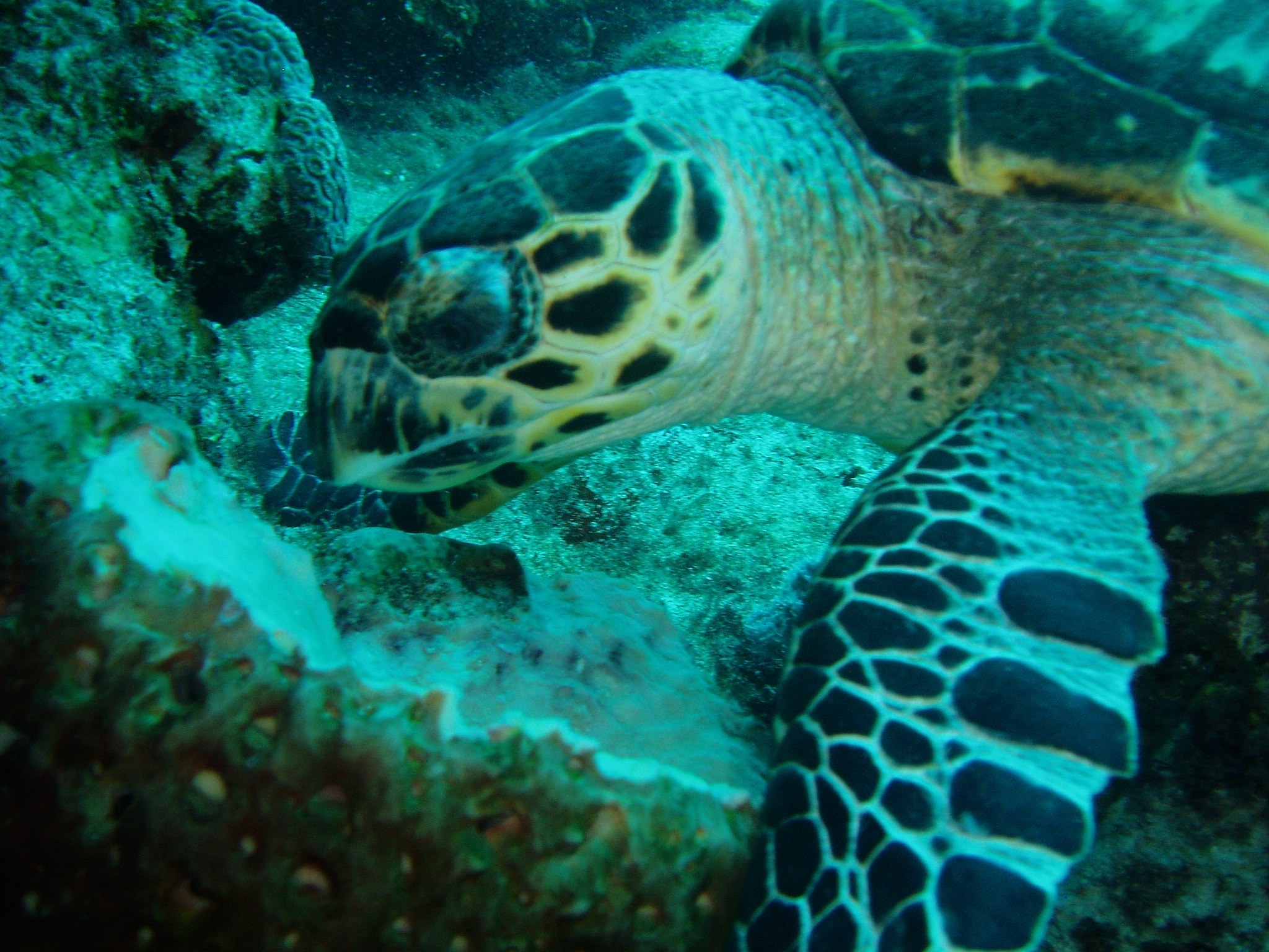 8 Turtle easting PC030101.png