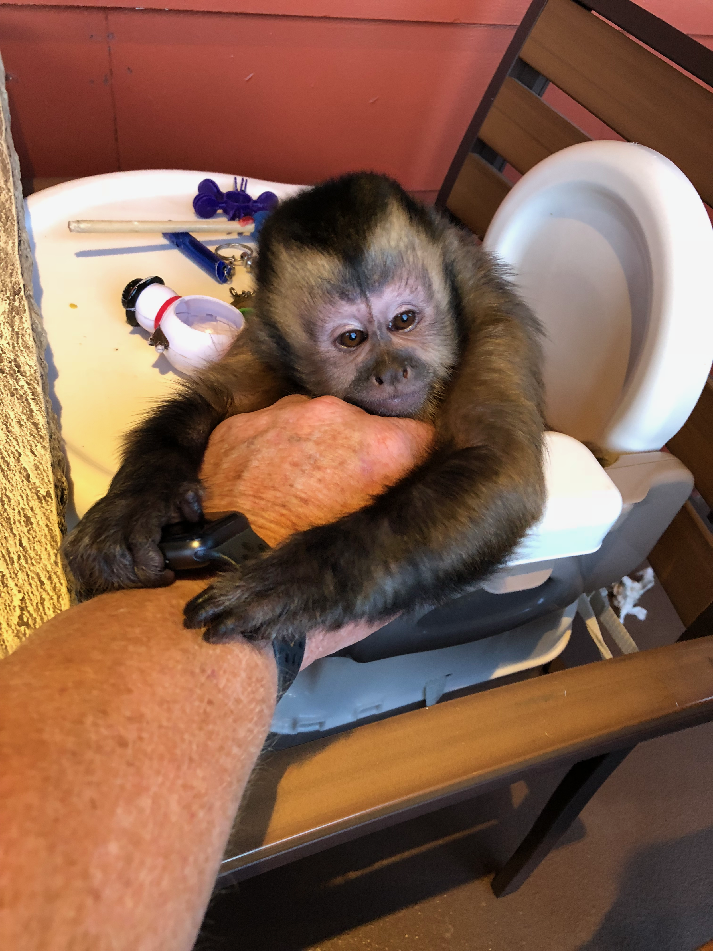 17 Monkey playing with watch IMG_4519.png