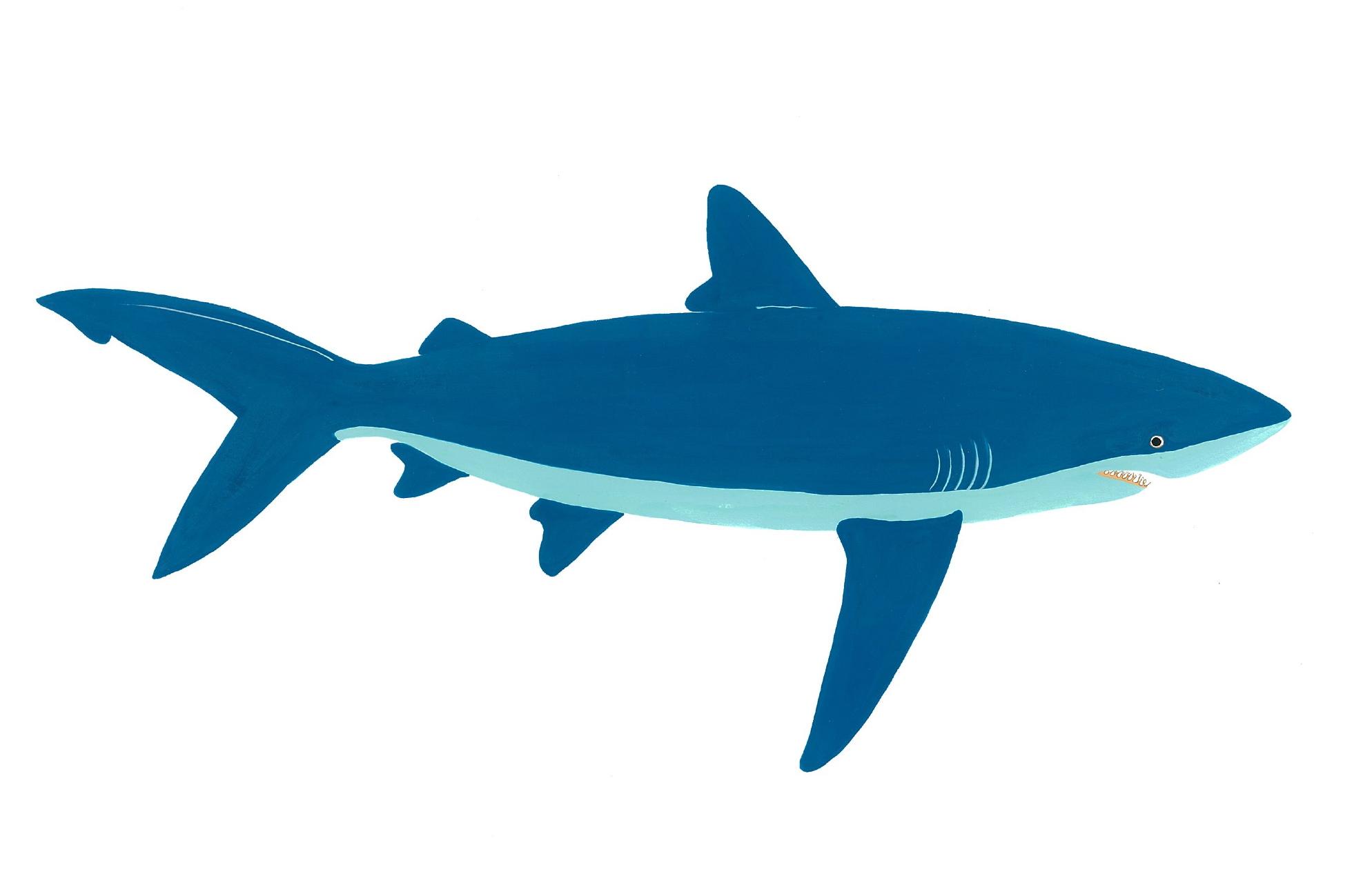 Blue Shark 2014. Gouache. SOLD