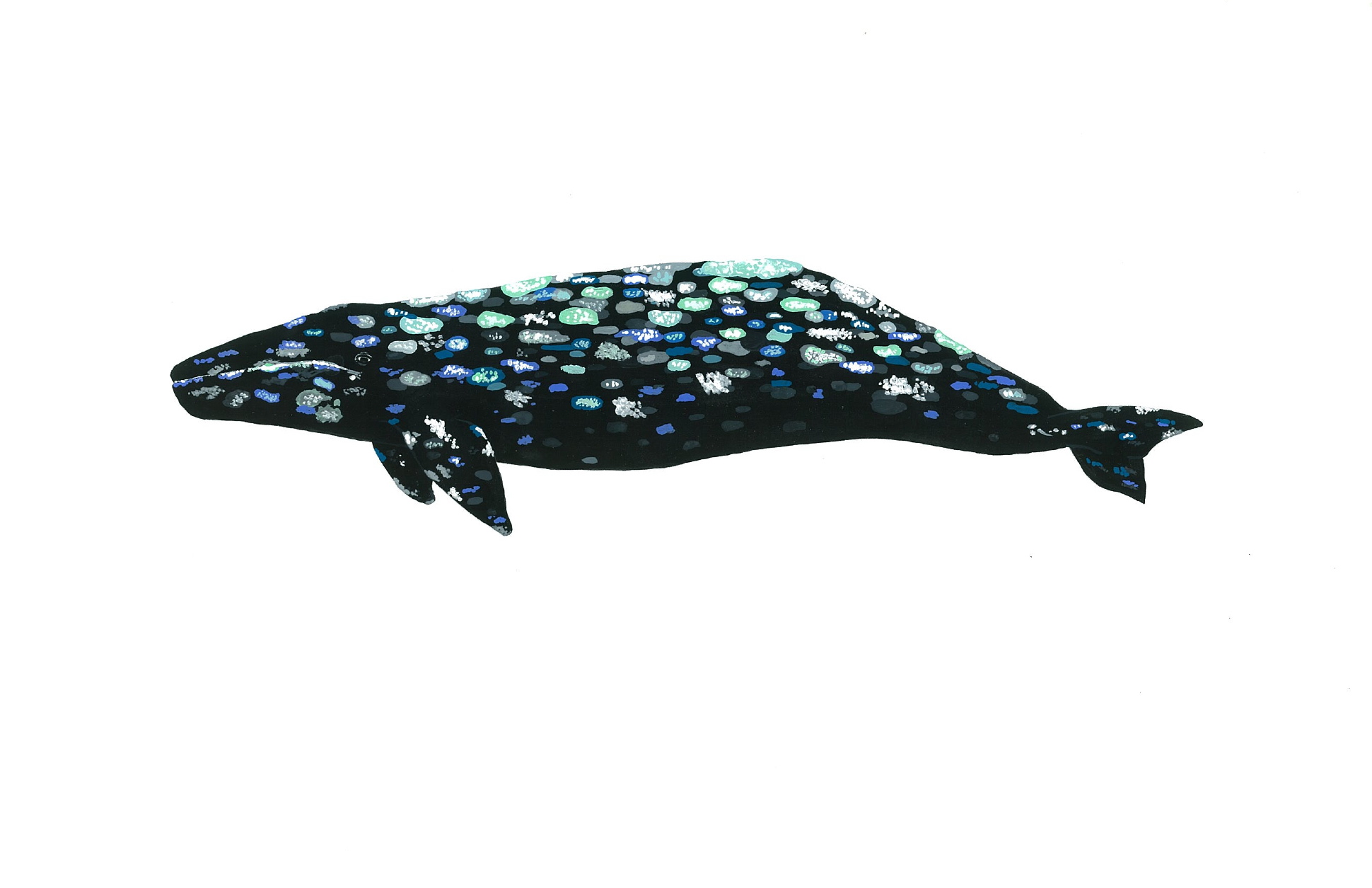 Gray Whale 2014. Gouache.  SOLD