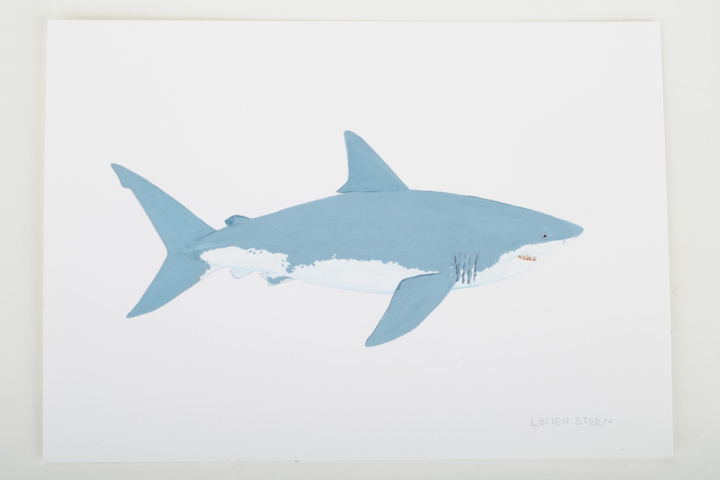 "Great White Shark 2015- 5"" x 7"". Gouache on 100% cotton acid free Stonehenge Paper"