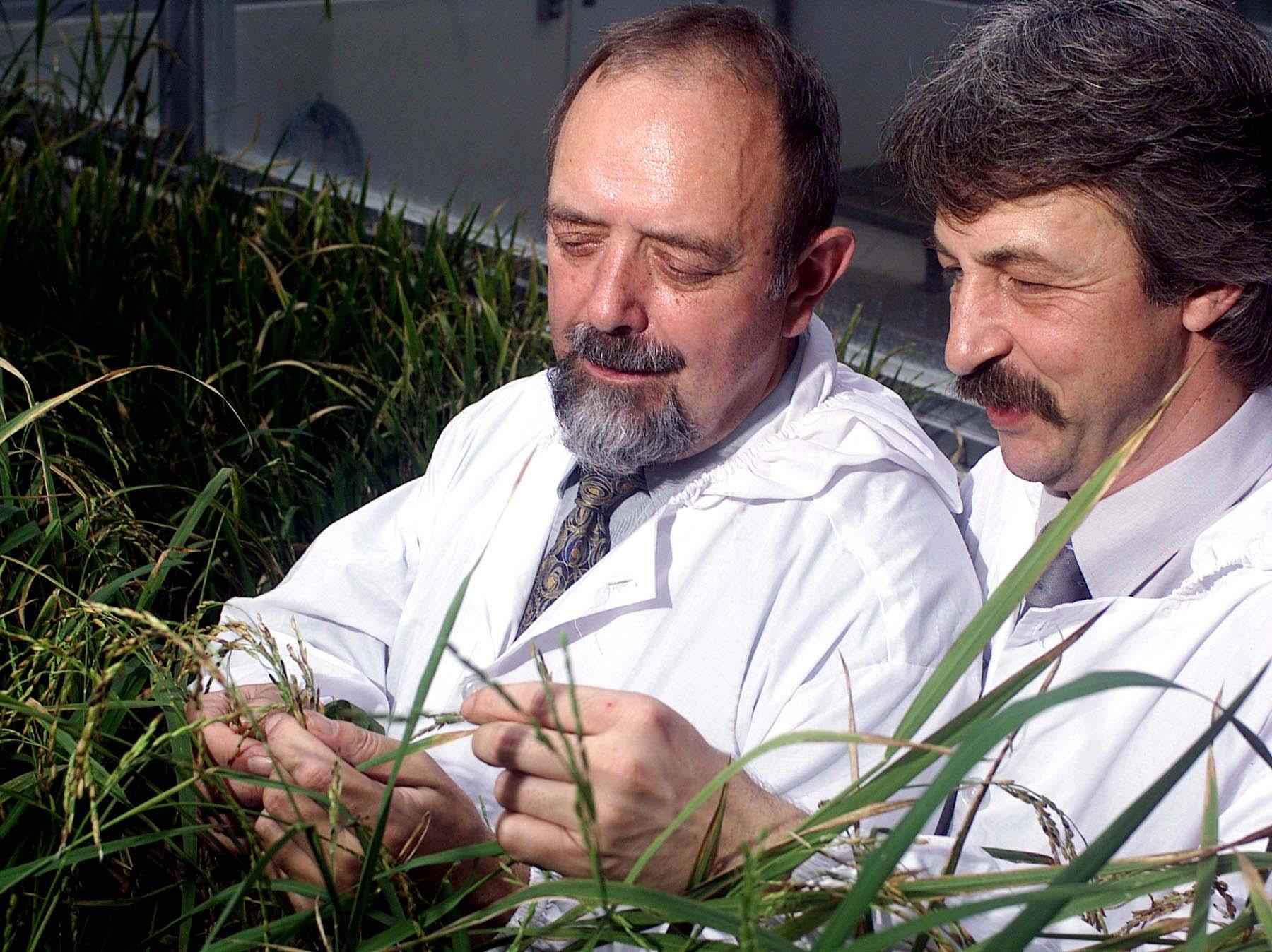 Ingo Potrykus (links) und Peter Beyer, die Erfinder des Golden Rice (Foto: goldenrice.org)