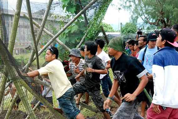 Aktivisten zerstören ein Versuchsfeld am IRRI (Foto:Philippine Department of Agriculture Regional Field Unit 5)