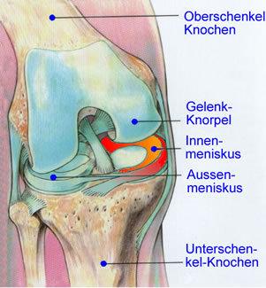 Anatomie des Knies (Kniescheibe fehlt)