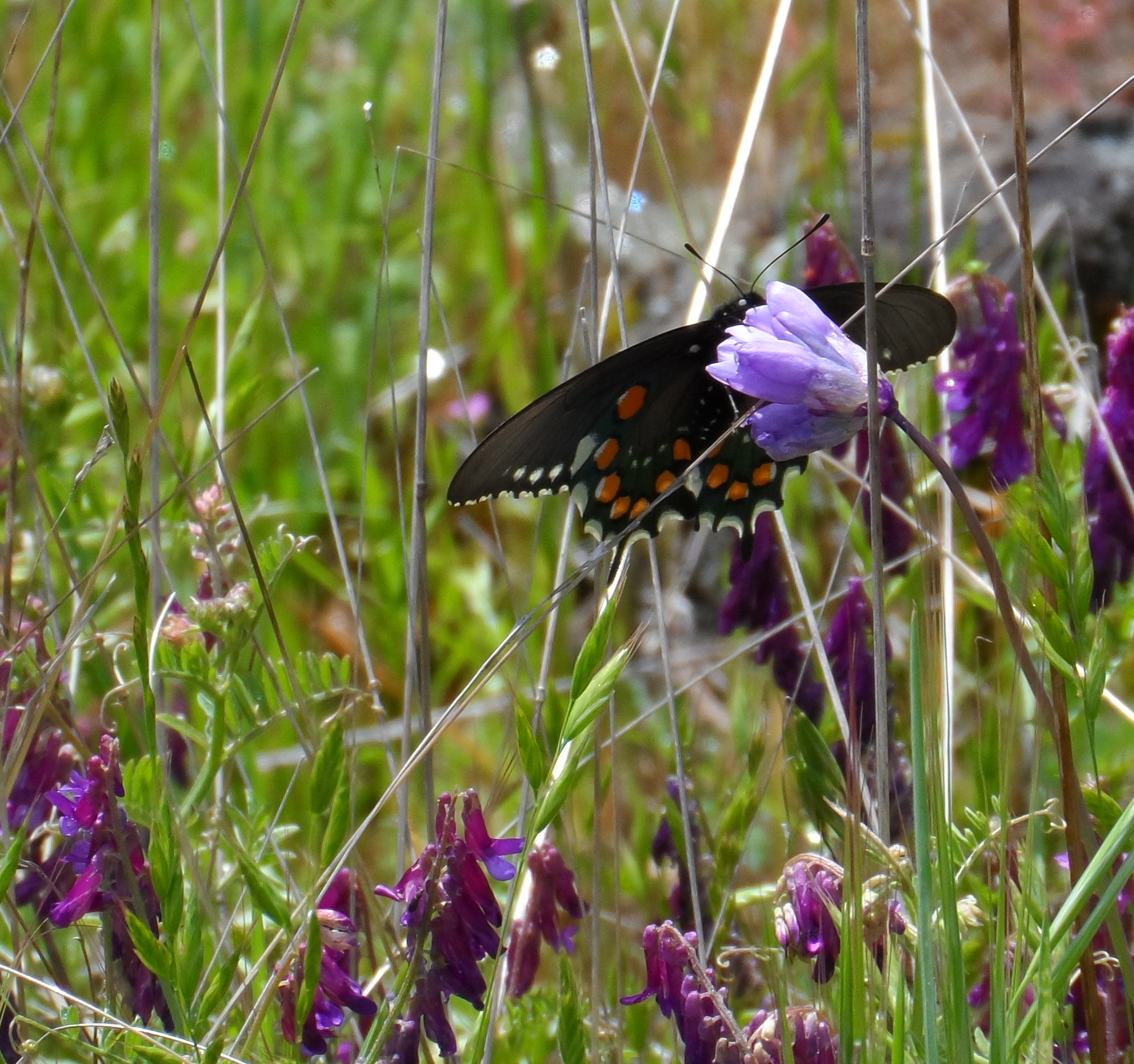 A butterfly that went along with me for a while on a hike.