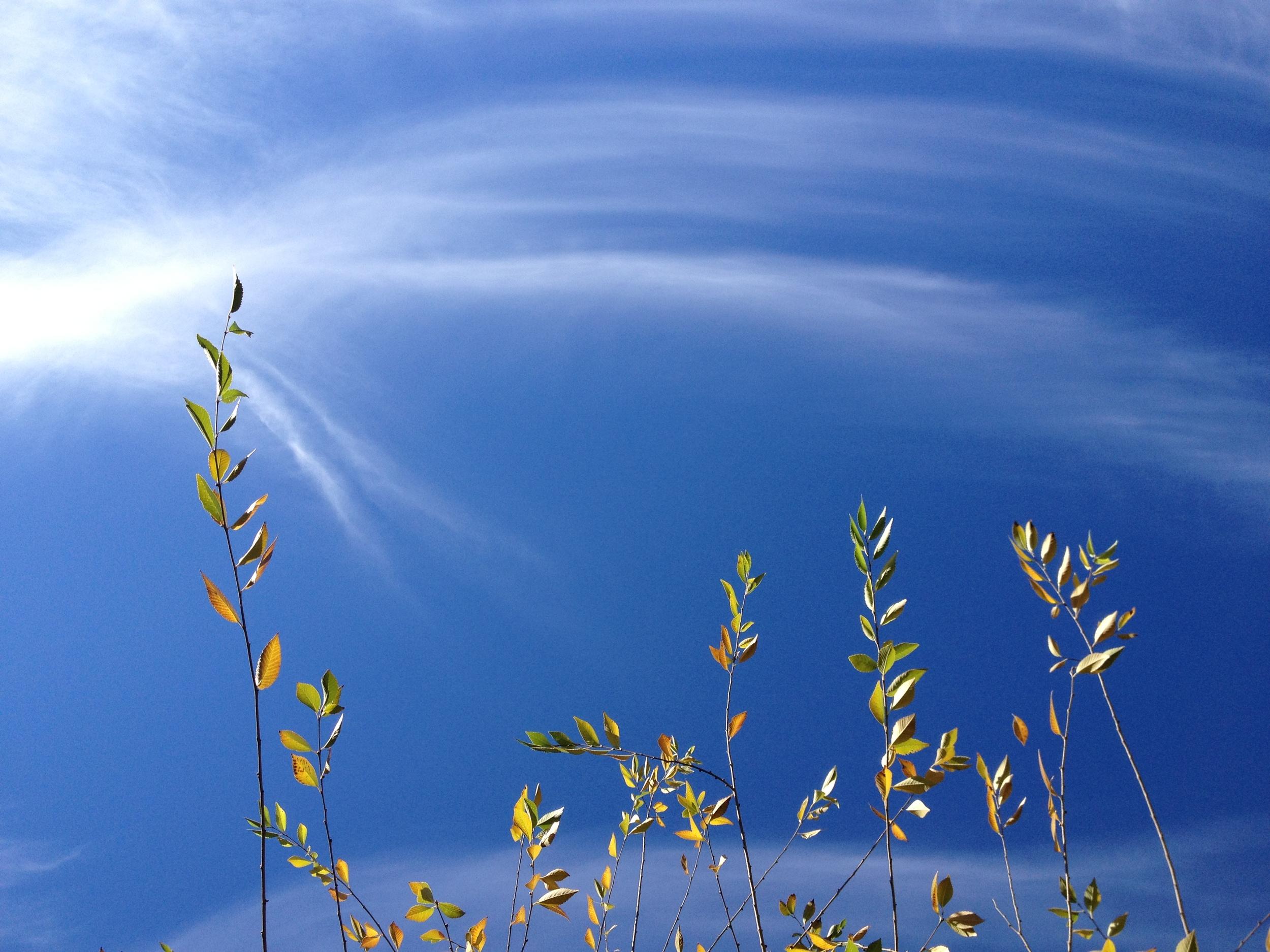 Blue and white skies.JPG