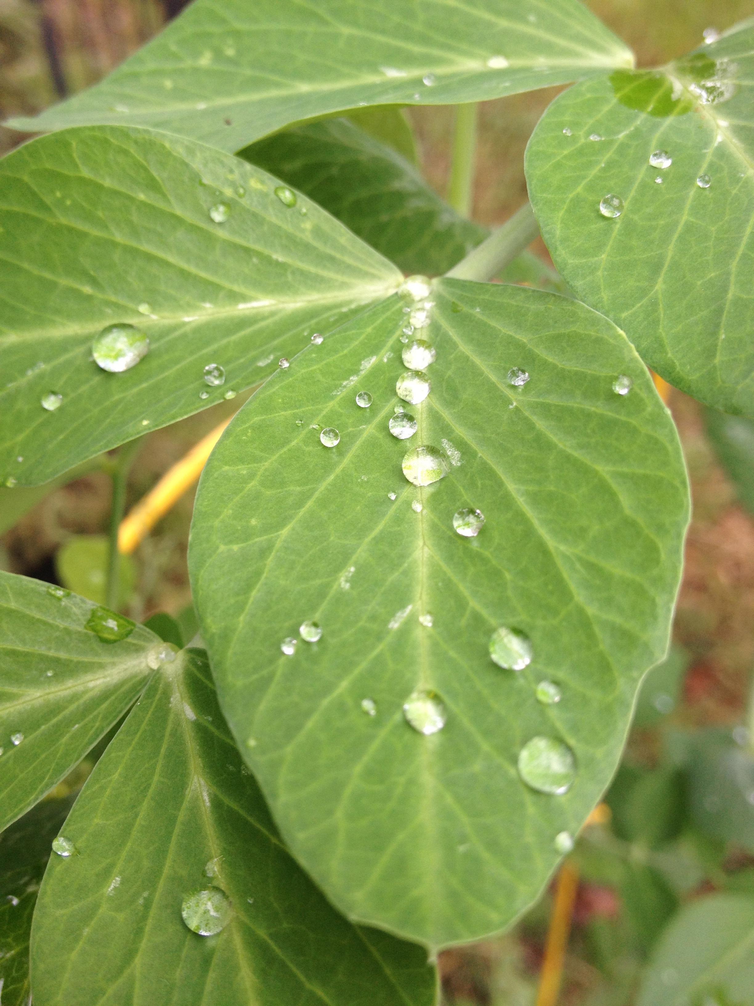 Let my words be like dew.jpg