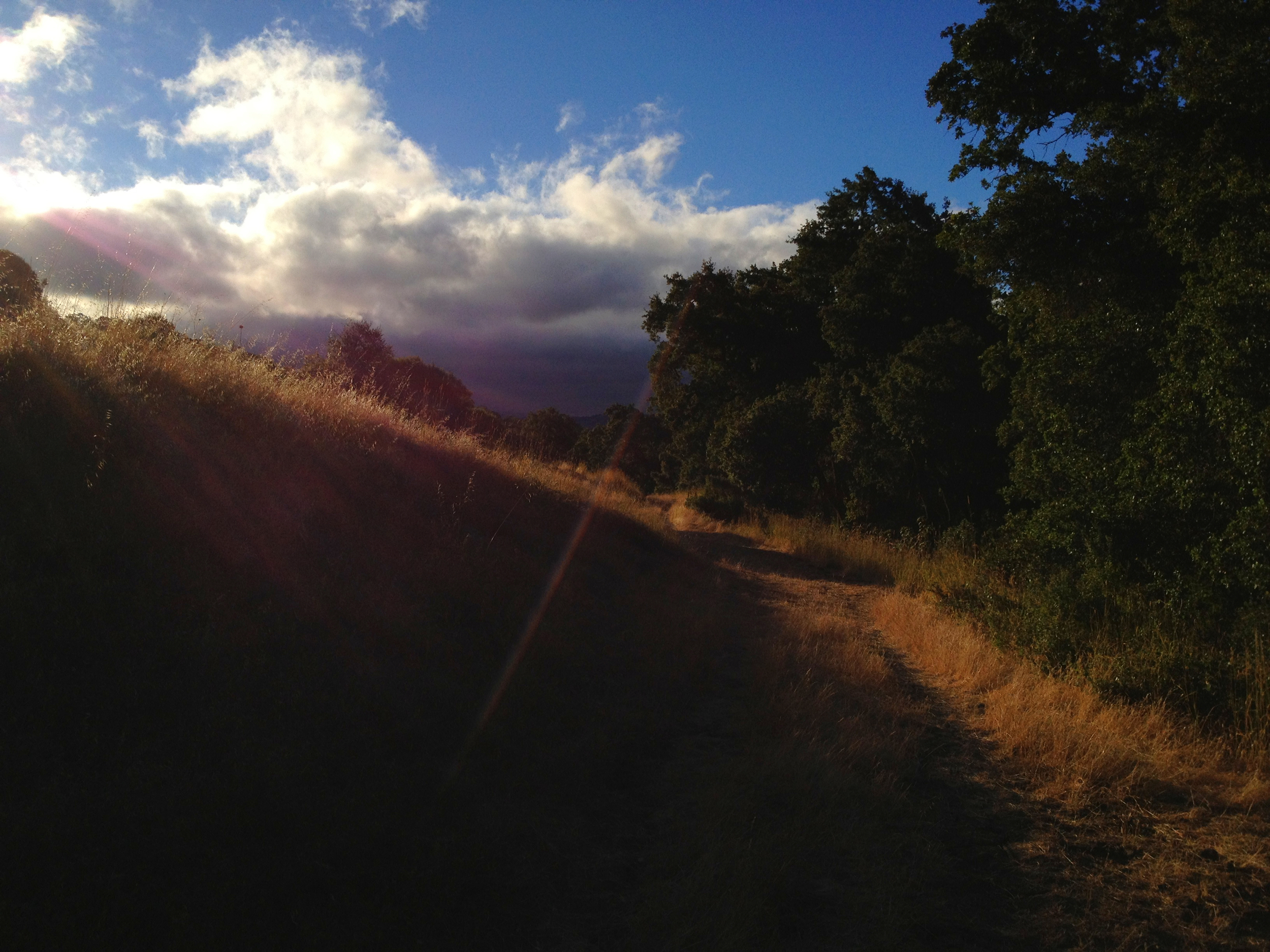 A Path in the Shadows.
