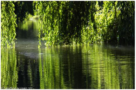 vyne green willow.jpg