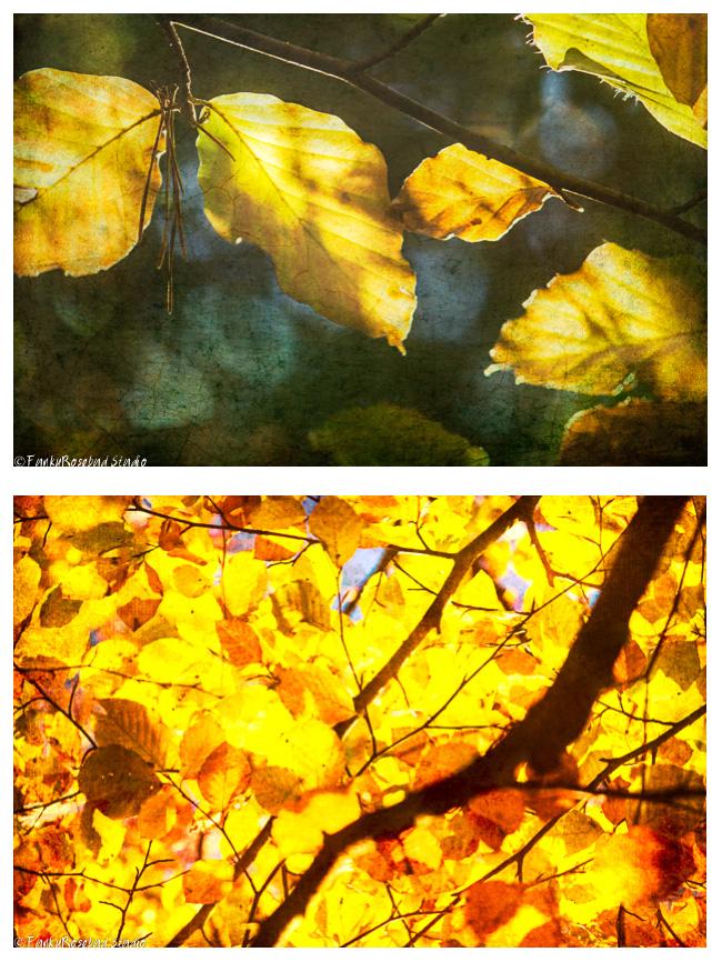 newtown leaves.jpg