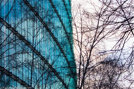green sony trees.jpg