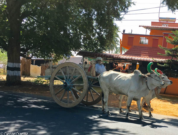 Bullock Cart on the road from Ooty to Coimbatore