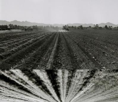 crop rows.png