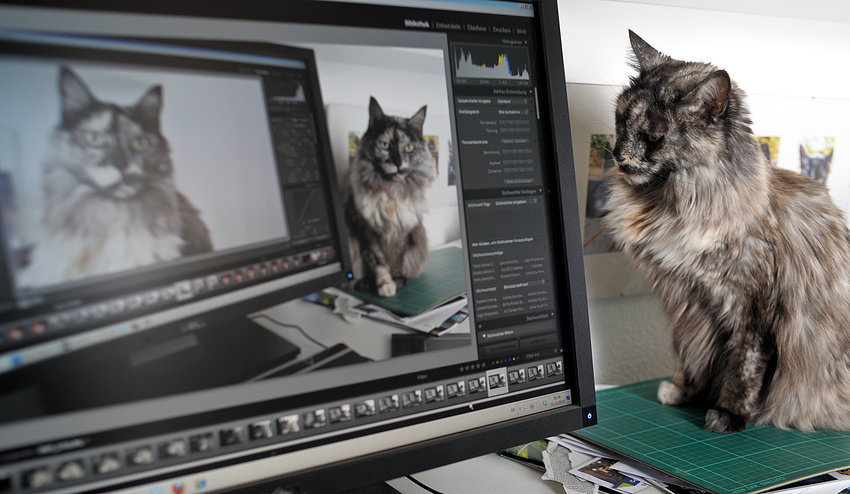 Hello World -  Hello Cat. (FYI: Sometimes tethered and Lightroom can be fun. And her name is Isis).
