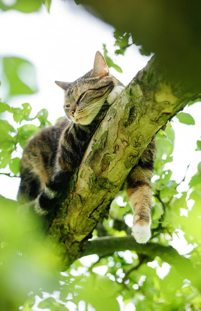 ... ein neuer Baum. Zeitweilig hatte ich Höhenrettung als neues Hobby.