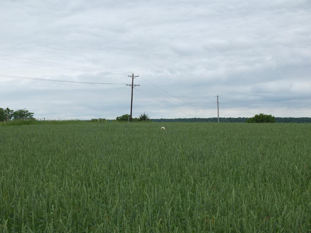 Fields plus farm dog's tail.