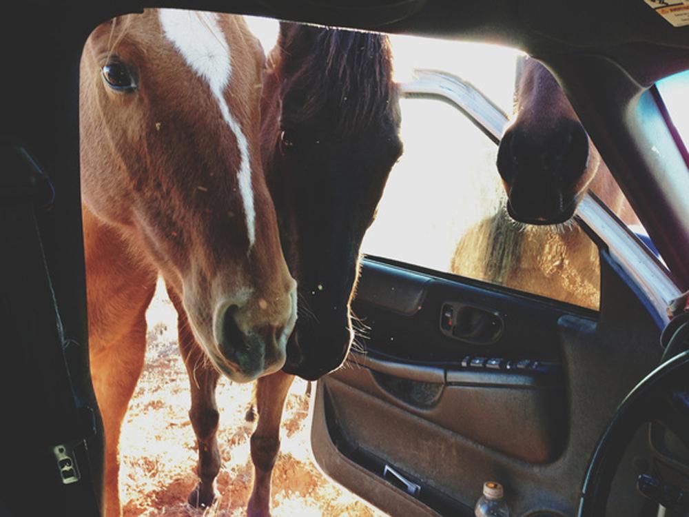 Kevin Russ -  Car Horses