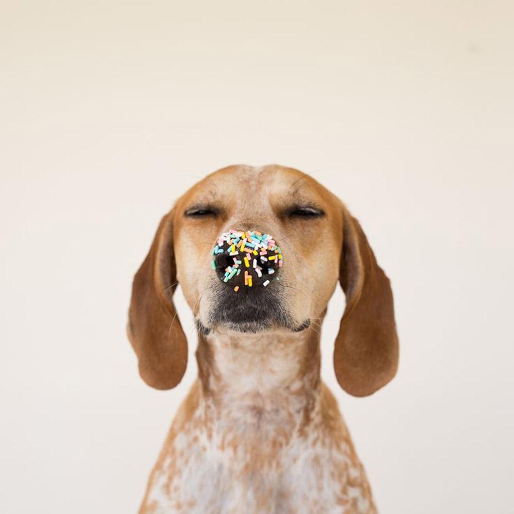 Maddie-Sprinkles.jpg